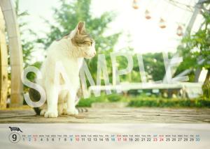 猫とビートルズ__79
