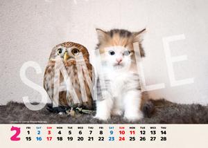ネコとフクロウ__158