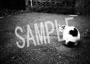 猫とビートルズ__141