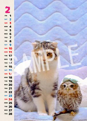 ネコとフクロウ__163