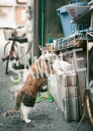 猫とビートルズ__235