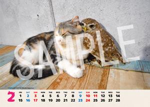 ネコとフクロウ__157