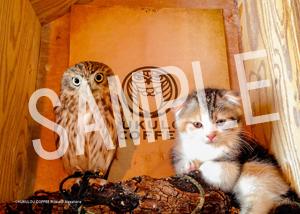 ネコとフクロウ__093