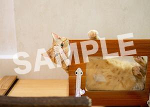 猫とビートルズ__432