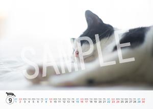 猫とビートルズ__196