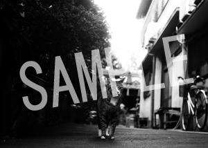 猫とビートルズ__224