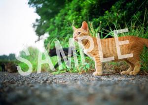 猫とビートルズ__124