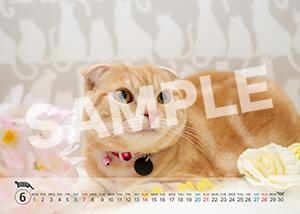 猫とビートルズ__417