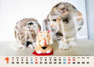 ネコとフクロウ__141