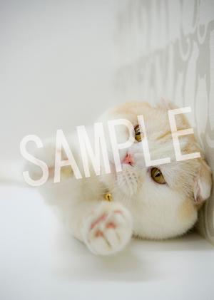 猫とビートルズ__171