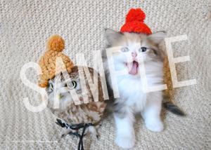 ネコとフクロウ__150