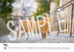 猫とビートルズ__166