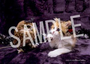 ネコとフクロウ__068