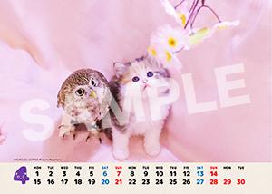 ネコとフクロウ__198