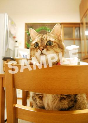 猫とビートルズ__381