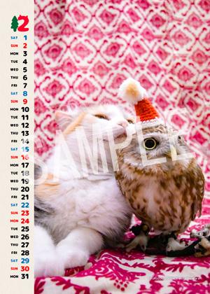 ネコとフクロウ__123