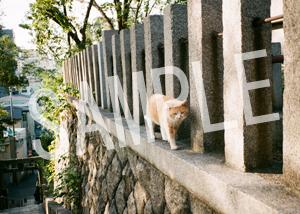 猫とビートルズ__252