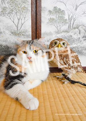 ネコとフクロウ__132
