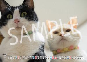 猫とビートルズ__16