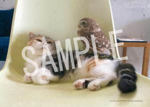 ネコとフクロウ__001