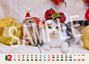 ネコとフクロウ__120