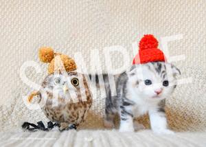 ネコとフクロウ__151