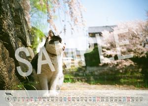 猫とビートルズ__36